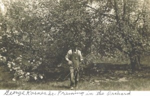 George Karnes Sr pruning in the orchard