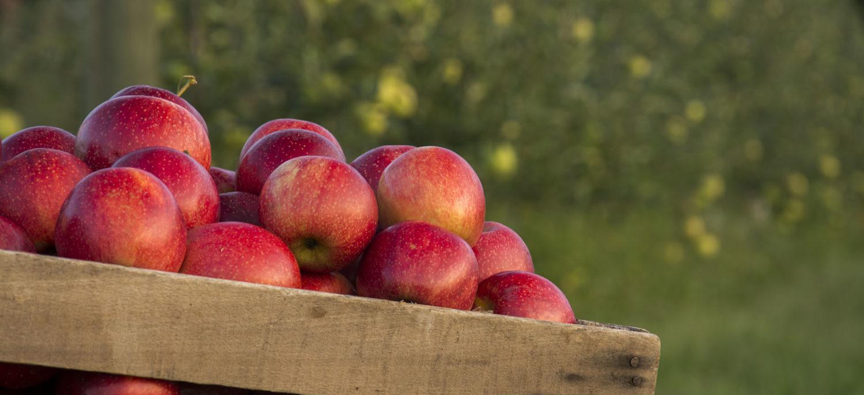 Karnes Orchard
